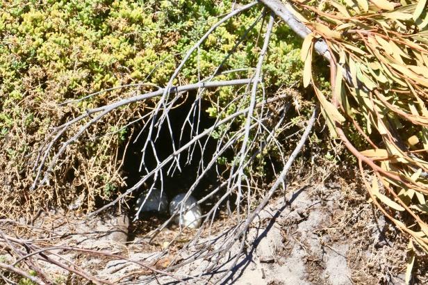 photo-6-2-oeufs-dans-le-nid