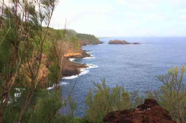 photo 10- falaises et forets de la colonie de Puffins du Pacifique