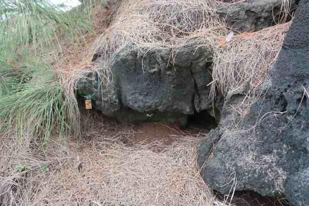 photo 16- nid numéro 42, suivi par Solenn