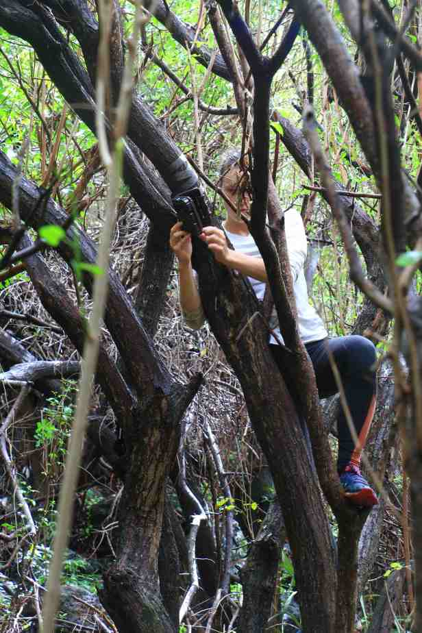 photo 25b- métier à compétences multiples- Solenn grimpe aux arbres!-1