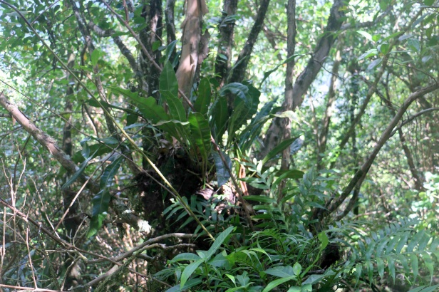 photo 5- plantes épiphytes