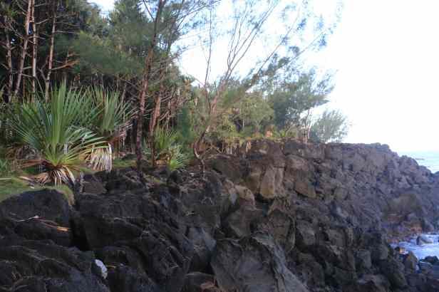 photo 7- la forêt sur une ancienne coulée de lave